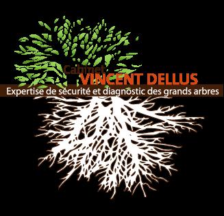 Cabinet Vincent Dellus